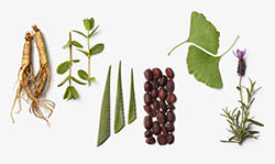 La-Biosthetique-Botanique-2